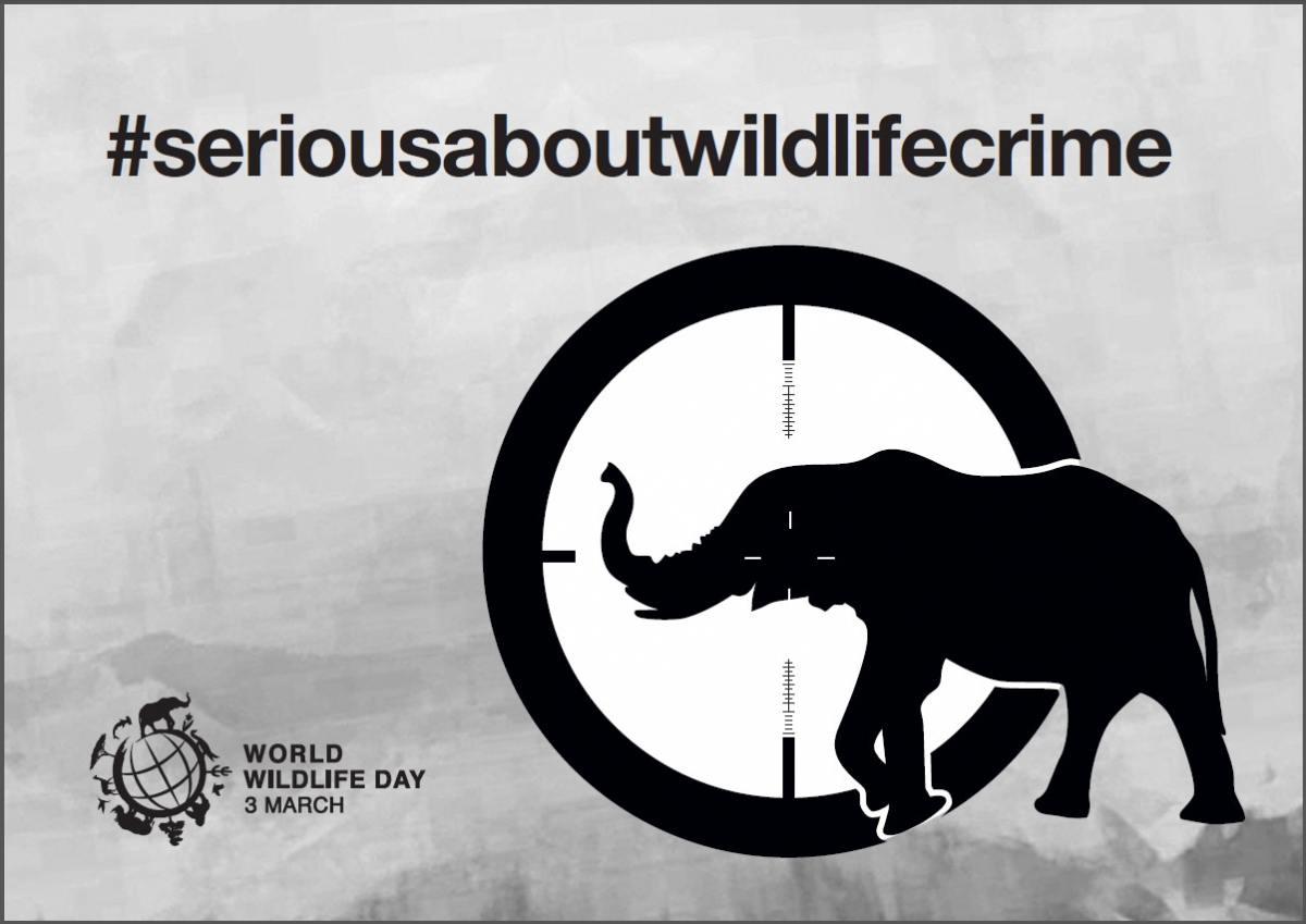 World Wildlife Day poster